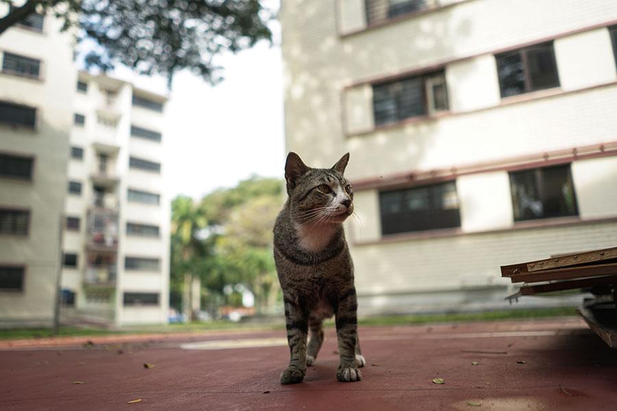 cats-of-dakota-01